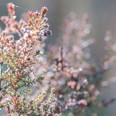 Waiting Summer - Kesää odottaen by Pauliina Kuikka on YouPic Nikon D300, Waiting, Nature, Summer, Naturaleza, Summer Time, Summer Recipes, Off Grid, Natural