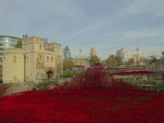 Poppies at tower of London #TowerofLondon #London #Remembrance