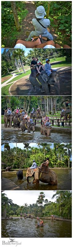 Experience personal interaction with these incredible animals in a beautiful tropical setting! The Elephant Safari Park in Taro is a must for visitors to Bali.  Click on the link to book online. http://www.balihotelguide.com/ThingstoDo.aspx?f5726b14f=aa90e605=127  ** BTDT