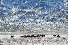 Camel herders, Gobi Desert, Mongolia; Timothy Allen