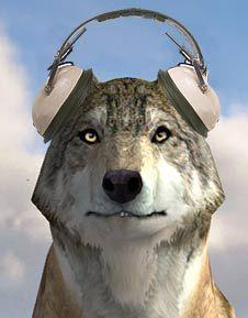 Wolfquest is a free immersive 3 d wildlife simulation game that wolfquest szukaj w google ccuart Choice Image