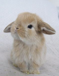 Getting a bunny!!! Needing name suggestions. Currently liking the name Murphy :)