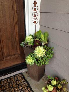 Front door planter arrangements home ideas flower pots diy rch planters supreme fall flowers for Hanging Succulents, Succulents In Containers, Succulents Garden, Succulent Landscaping, Flower Containers, Succulent Gardening, Faux Succulents, Crassula Succulent, Succulent Pots