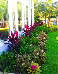 stunning way to add tropical colors to your outdoor landscaping