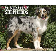 Just Australian Shepherds Wall Calendar: Australian Shepherds