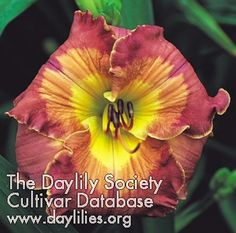 Daylily Inca Puzzle