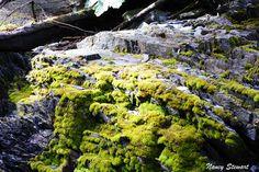 #Alaska #Photography #Nature