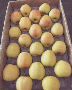 True love... #EnjoyFruit #ByDelBello #Lovita #ItalianFlavour #TasteMe #BiteMe #LadyApple #FromItalyWithLove #EatItalian #WeAreComing #WeAreReady #FruitLover #instafood #PremiumQuality #GoldenDelicious #ApplesGoldenDelicious #apples #amazing #mangiamela #melamangio #EatHealthy #fruit #food #LoveNature #gnam #foodporn #fruitporn #Canada