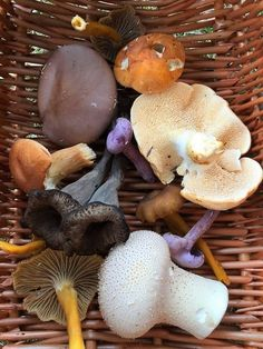 How to Identify 4 more tasty edible wild mushrooms.