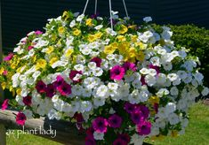 Colorful Flower Container Ideas-birdsandbloomsblog.com