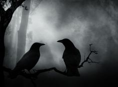 Dark Crows Couple wallpaper from Dark wallpapers
