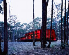 Peter Bennetts  ARCHITECTURE Photographer  JESSE JUDD/JLMA  04.06.05    Jesse Judd's house is set in a eucalyptus plantation and has a stained plywood interior that seems to glow amongst the monochromatic trees.