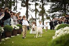 Pajens, daminha e o melhor amigo dos noivos juntos. Que coisa linda!!!  #wedding #casamento #pajem #dama #dog #pet #rustic #weddingrustic #décor #decoração