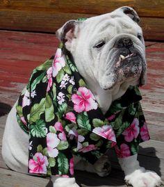 Order ENGLISH BULLDOG Hawaiian Shirt, Hawaiin Dog Shirt, Pet Clothes, English Bulldog Pool summer shirt, Dog Costume, Bulldog, Hawaiin Shirt