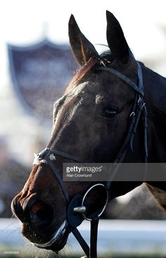 Sprinter Sacre after a schooling session before racing at Newbury racecourse on December 29, 2014 in Newbury, England.
