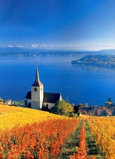 vineyards, Three-Lake-Country ~ view from Twann looking over the Bielersee,  Switzerland
