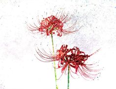 Spider Lilies Abstract Photography Art Print, Fall Blooming Spider Lilies Wall Art, Red And Green Spider Lily - Trend Lilie Tattoo 2019 Abstract Photography, Fine Art Photography, Tokyo Ghoul Dibujos, Watercolor Flowers, Watercolor Art, Red Spider Lily, Red Lily, Abstract Wall Art, Picture Tattoos