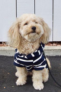 FAB DOG RED Baby Blue UNICORN Sweater Dog//Puppy MEDIUM