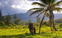 Maui Spa Resort & Hotel | Travaasa Hana