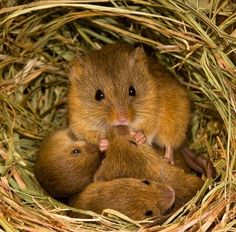 Sweet Little Family of Mice
