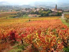 Golden stones Beaujolais guided walking holidays France