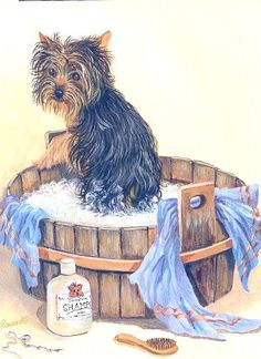 Yorkies, Yorkie Dogs, Dogs And Puppies, Animals And Pets, Cute Animals, Silky Terrier, Therapy Dogs, Cartoon Dog, Cute Images