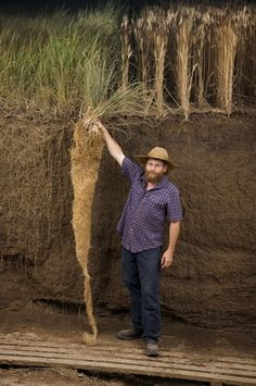 Jerry Glover, a soil scientist, shows off a perennial wheatgrass plant's long roots, which grow deeper than annual plants' roots, improving soil structure and reducing erosion.