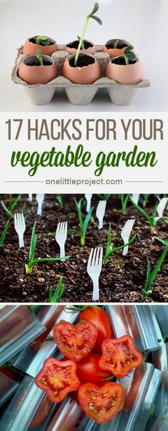 Here are 17 fun and clever vegetable garden hacks to help make your garden more successful this year!  #GardeningIdeas