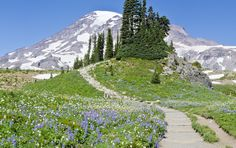 Rainier's glory beckons in August and NW hikers hit the trails! Honeymoon Registry, Road Trip Planner, 100 Things To Do, Mount Rainier National Park, Road Trip Destinations, Road Trippers, Life Is Beautiful, Places To Travel, Paths