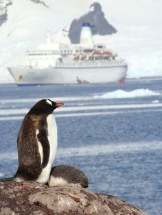 Penguin with Ship, Antarctica.