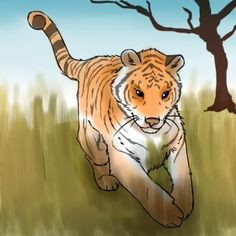 How to Draw Tigers, Step by Step, safari animals, Animals, FREE Online Drawing Tutorial, Added by PuzzlePieces, February 12, 2011, 6:40:36 am