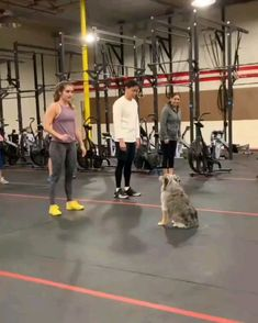 Tesla started a new job this week as a CrossFit Instructor Funny Animal Videos, Funny Animal Pictures, Cute Funny Animals, Cute Baby Animals, Funny Dogs, Animals And Pets, Cute Puppies, Cute Dogs, Tier Fotos