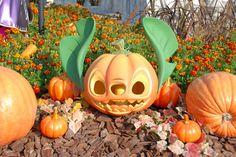 Stitch Pumpkin!