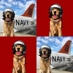 It all starts with a photo, we take care of the rest. Not sure where you find a pilots helmet, or a plane, but those aren't required. Just the dog.  #popyourpup @loochworl