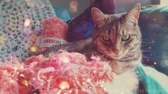 Sam guarding the #zpagetti #cats #katten #hoooked #meow