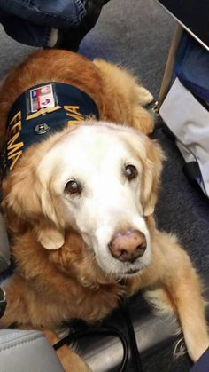 Texas Task Force 1's Hero Dog nominee Bretagne has boarded her flight and is ready for her trip to New York City!  Help make her the star! You can do it daily until September 15:  http://herodogawards.org/vote/  #TEEX   #USAR   #HeroDog