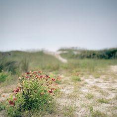 Ocracoke Island - Outer Banks NC - OBX - Cape Hatteras National Seashore