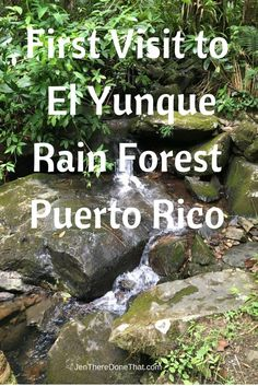 First Visit to El Yunque Rainforest - Jen There Done That