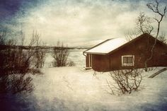 Snowy landscape - null