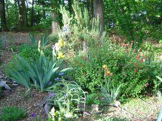 Early spring garden.