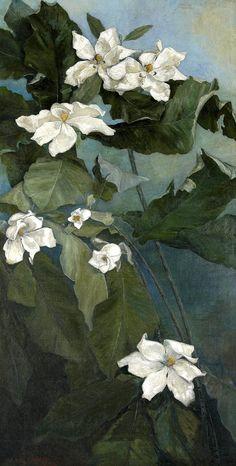 Ida Jolly Crawley - Magnolia Macrophylla