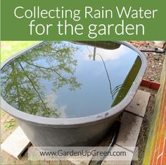 How to Collect Rain Water for the garden