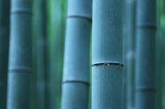 Located : Arashiyama-Sagano, Kyoto.  Jun 26, 2012.
