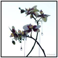 Flowerpin Verkrijgbaar in verschillende lengtes en modellen. mooibijplanten.nl