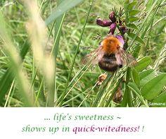 ... #life's sweetness ~ shows up in #quick_witedness ! ( #Samara )