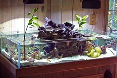 "The following 75 gallon aquarium is the creation of Kyle Verry and is the next iteration of his Volcano Tank that he tore down in late 2010 to create this new tank design.  The tank is rimless, measures 48"" x 24"" x 12"", and the main feature of the tank is a central raised ""basin"" of rock that appears to be fed water from a submerged aquarium pump"