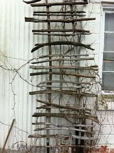 Trellis made from branches off the winters cut