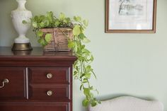 Stock your bedroom with living plants to bring a breath of fresh air into your home. Choose plants that are easy to grow for low-maintenance decor. Best Plants For Bedroom, Bedroom Plants, Bedroom Wall, Bedroom Decor, Wall Decor, Dream Bedroom, Bedroom Ideas, Best Indoor Plants, Cool Plants