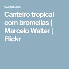 Canteiro tropical com bromelias | Marcelo Walter | Flickr