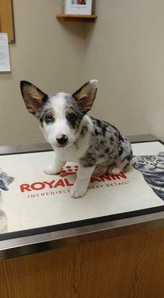 Things that make you go AWW! Like puppies, bunnies, babies, and so on. A place for really cute pictures and videos! Best Pal, Corgis, Picture Video, Bunnies, Poppies, Cute Pictures, Make It Yourself, Future, Dog